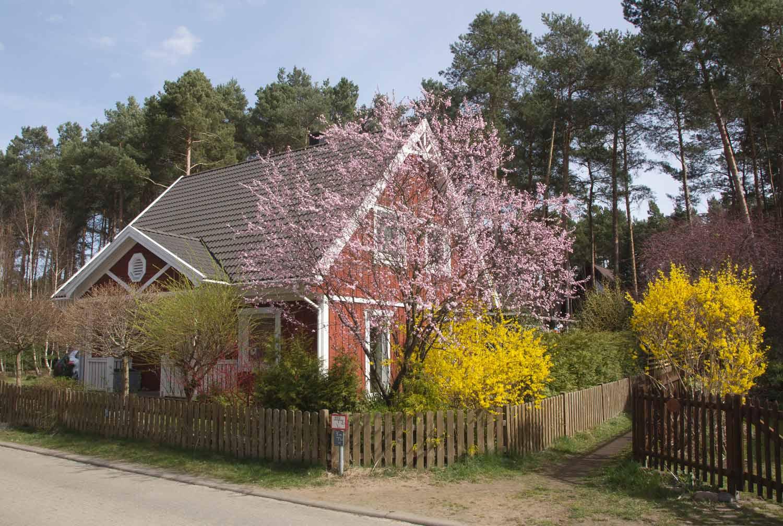 Buntes-Borkwalde-001