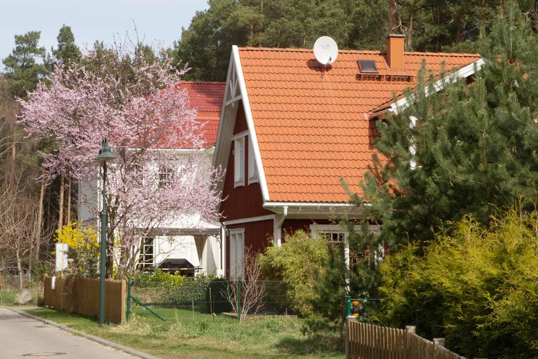 Buntes-Borkwalde-011
